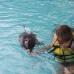 Con delfines en Bali