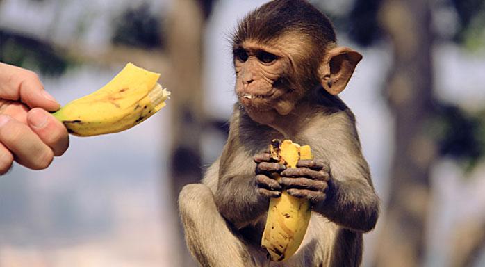 comida de monos india molaviajar