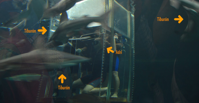 molaviajar con tiburones en mexico