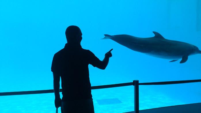 delfines en mexico molaviajar.com