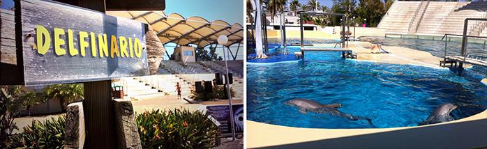 actividades con delfines cataluña