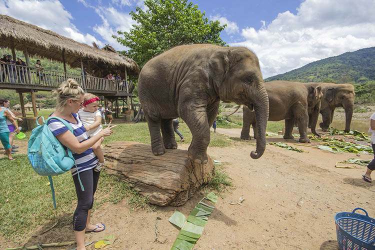 daniela molaviajar elefantes