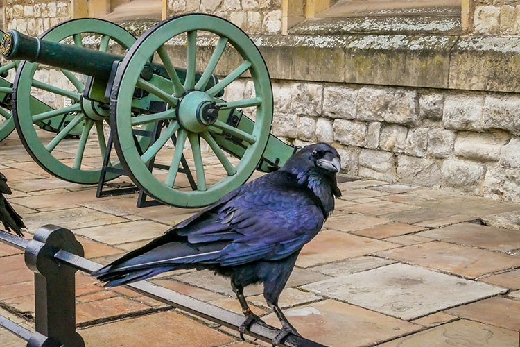 cuervo londres
