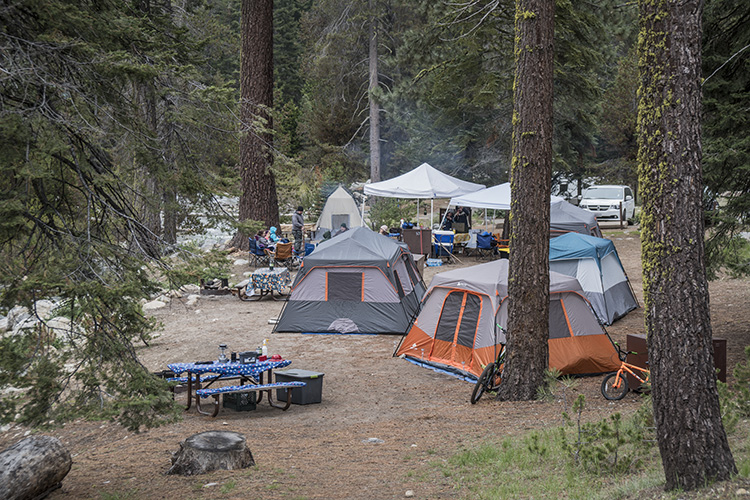 camping sequoia parque molaviajar