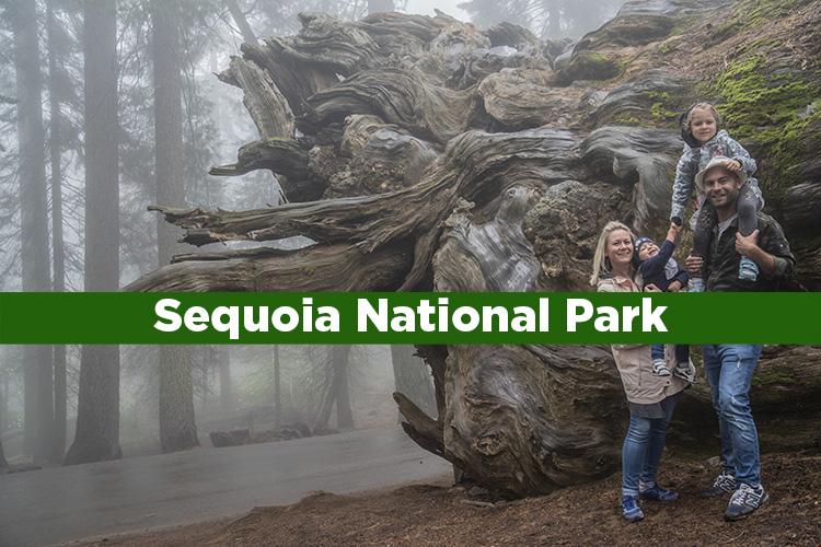 Sequoia National Park. Consejos para tu visita